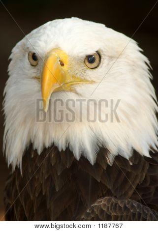 Bird 30