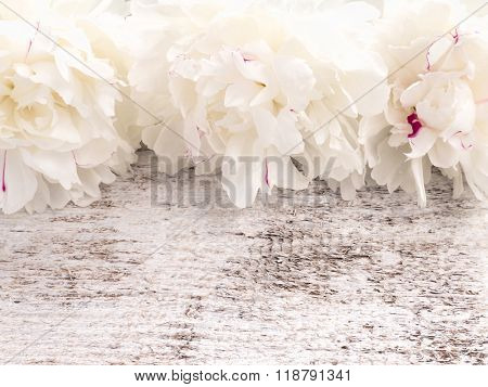 Three White With Red Sprinkles Peony Flowers