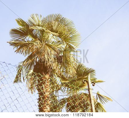 Retro Looking Palm Tree