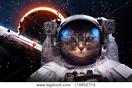 Brave cat astronaut at the spacewalk. This image elements furnished by NASA poster