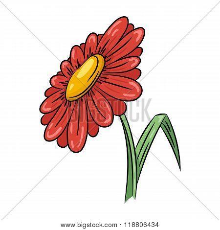 Daisy flower illustration