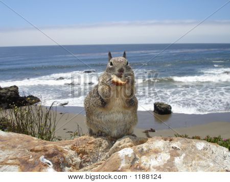 Squirrel At The Beach