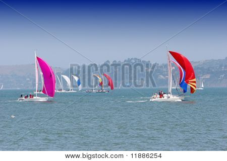 Sail boats in San Francisco bay