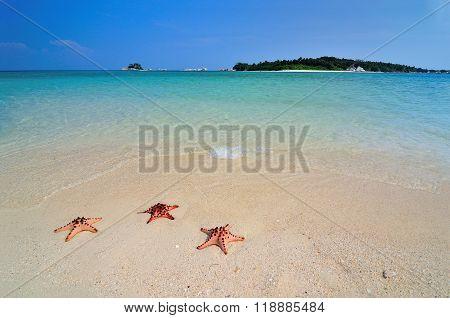 Three Starfishes