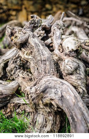 Old Dead Vines In Gathered Deadwood