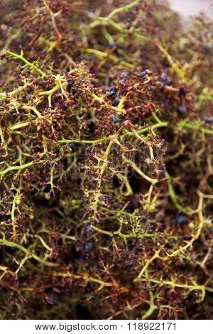 Residues Of The Vine