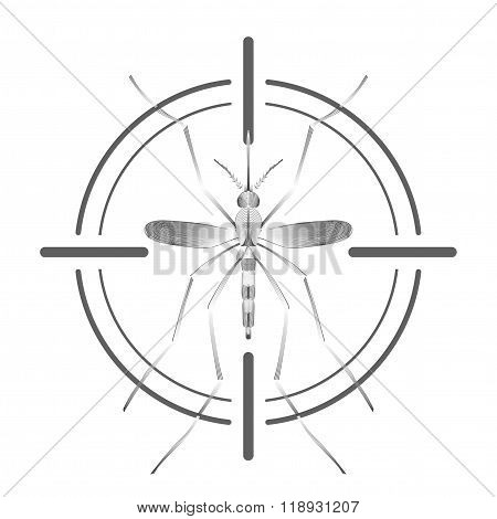 Fever mosquito species aedes aegyti in grey aim isolated on white background
