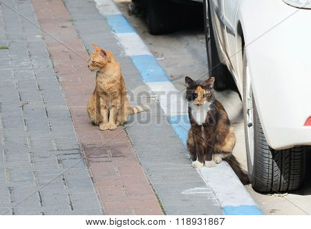 Two Homeless Cats
