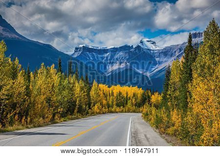 Bright yellow aspen and birch beside the road. Canadian Rockies, Banff National Park in the autumn. Majestic mountains and glaciers on the background of cloudy sky