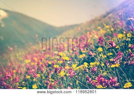 Blooming Flowers in mountains valley alpine Spring Summer seasons