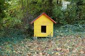 a little yellow dog house in a garden poster