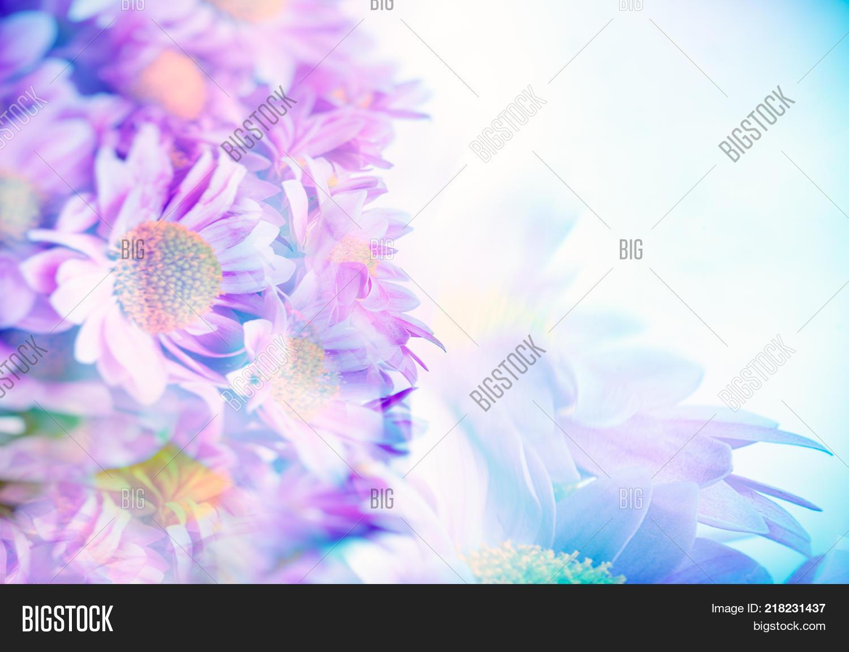 Border beautiful pink image photo free trial bigstock border of a beautiful pink blue daisy flowers gentle flower bouquet fine art background izmirmasajfo