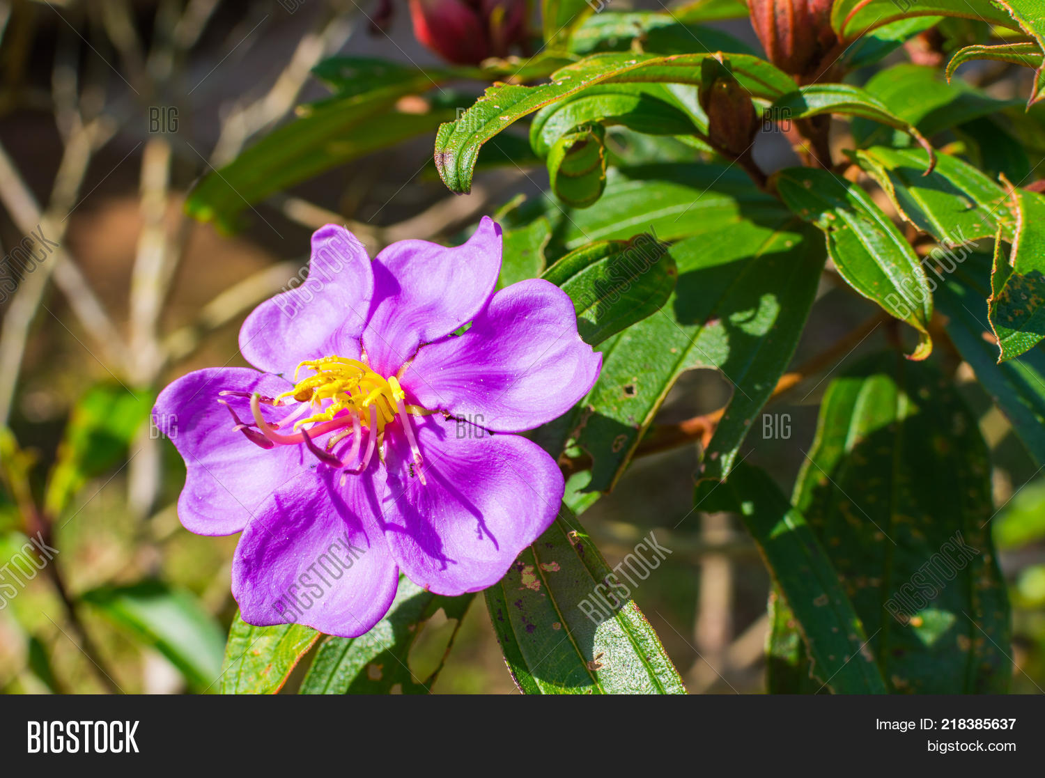 Purple flower yellow image photo free trial bigstock purple flower with yellow center in the garden mightylinksfo