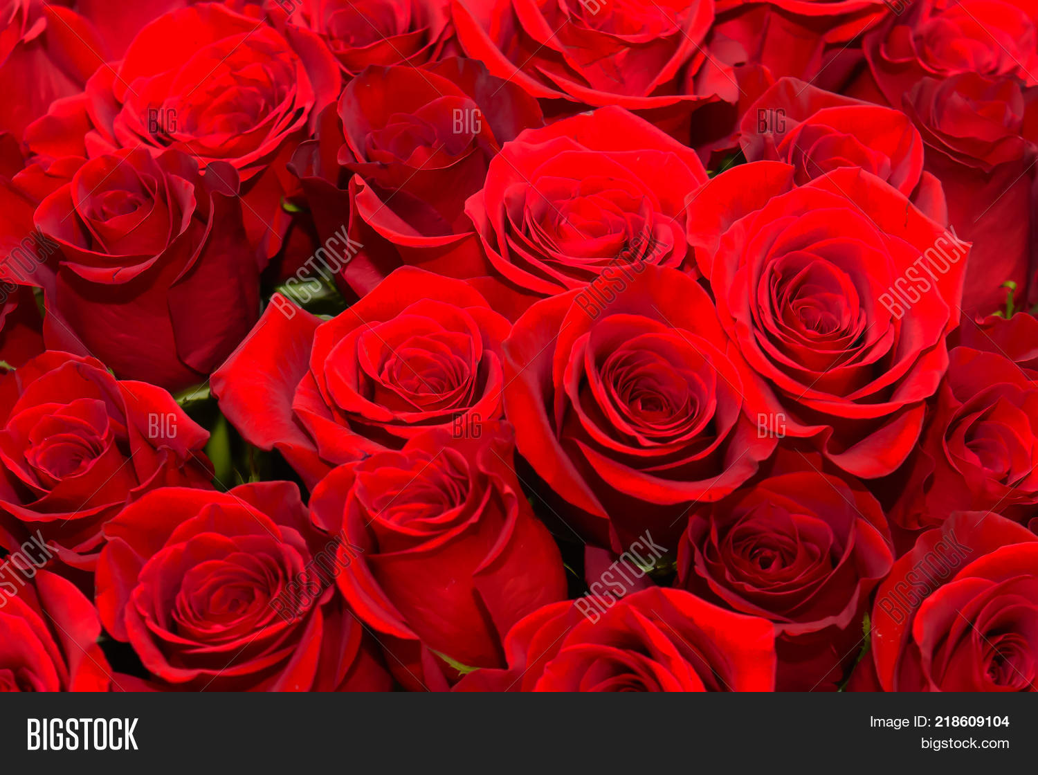 Many red roses image photo free trial bigstock many red roses scarlet luxury rose close noble holiday flowers for a gift izmirmasajfo