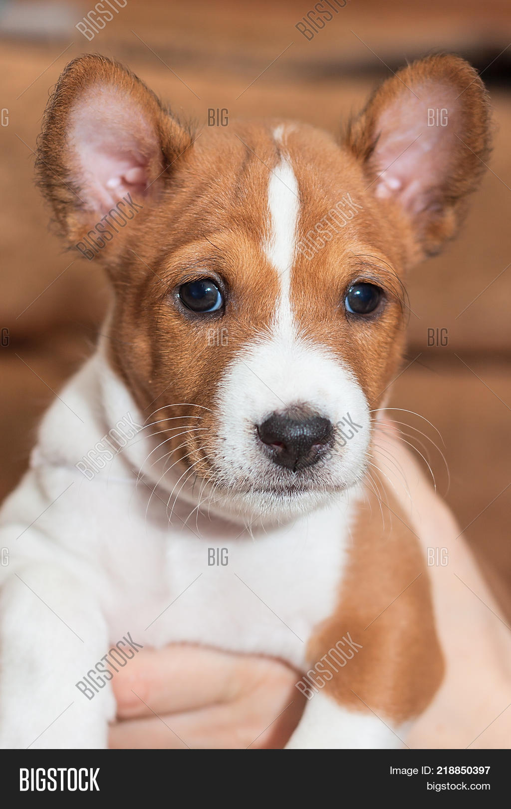 Beautiful Cute Puppy Image Photo Free Trial Bigstock