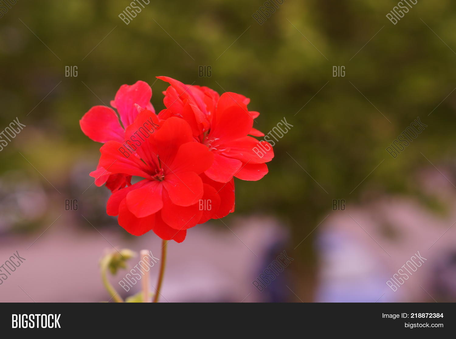 Flowers Red Color Image & Photo (Free Trial) | Bigstock