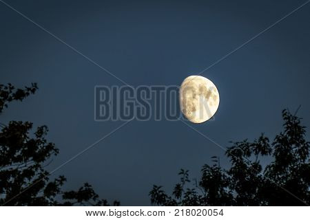 Half moon on blue sky over trees at dusk time