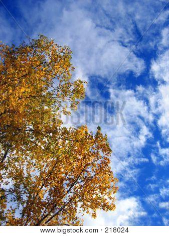 Autumn Sights
