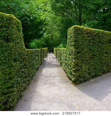 Hedges in the city park in Germany.
