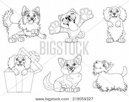 The set cute puppy dogs of a Border Collie, Cocker Spaniel, Akita Inu, Welsh Corgi and Scottish Terrier breeds. A black contour line on white. A vector cartoon illustration, page coloring book.