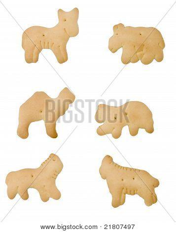 Isolated Animal Cracker