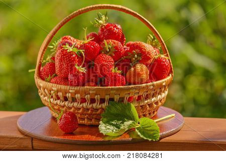 Ripe strawberries in basket in the garden with blurred green background. Basket filled with freshly picked strawberries. shallow depth of field. Selective focus.