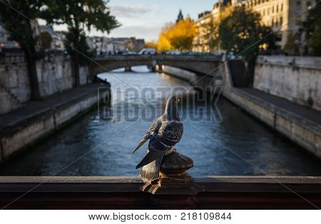 Birds In Paris. View From Pont Au Double
