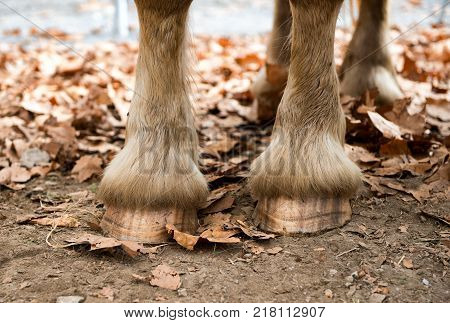 a close up of a horse's hooves