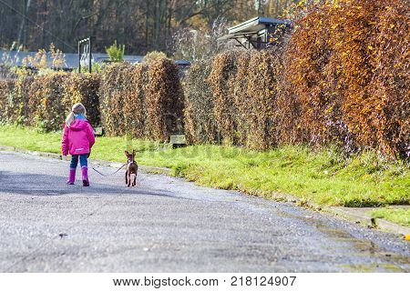 Little girl walking with miniature pincher puppy in the city
