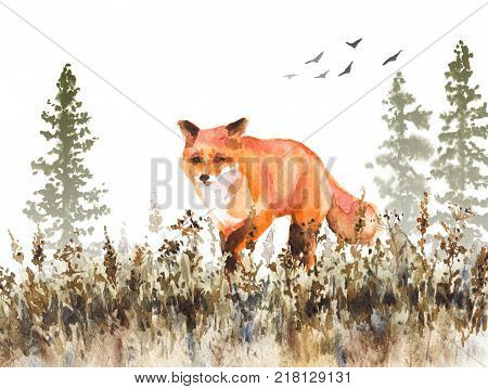 Watercolor painting. Hand drawn animalistic illustration. Red fox walking on fading meadow. Autumn scene with wild predator motion fir-trees in mist and dried grass.