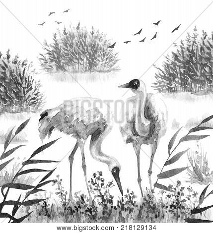 Watercolor painting. Hand drawn illustration. Couple Siberian Cranes in reeds. Monochrome wetland scene with wading bird. Cane thicket and grass in mist.