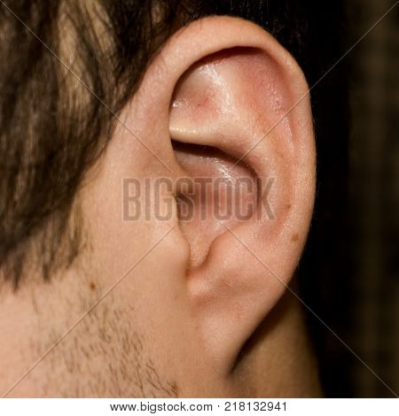 Male ear. Adherent earlobe close-up. Square photo.