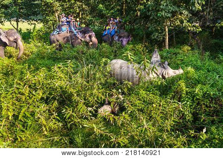 CHITWAN NEPAL - September 27 2013: Tourists visiting the jungle on the backs of elephants. Meeting with a rhinoceros and his baby rhino. In the jungle is organized safari on elephants.