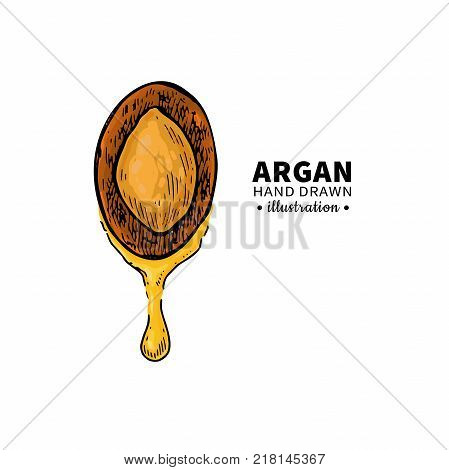 Argan vector drawing.  Organic essential oil sketch. Isolated   illustration of nut. Beauty and spa, cosmetic ingredient. Great for label, poster, flyer, packaging design.