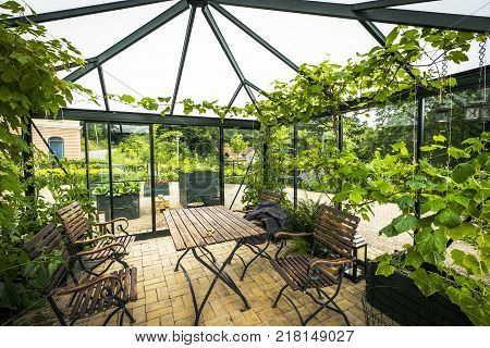 Terrace in a glass house with wooden garden furniture in the summer with green plants