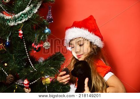 Santa claus kid near Christmas tree. Christmas happy child with puppy. Winter holiday and dog year concept. Xmas party celebration and childhood. Girl shows cone to little dog on red background