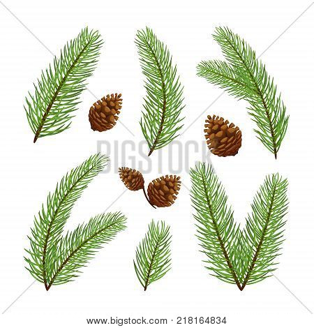 Christmas decorations. Set of fir-tree branches with pine cones isolated on white background, illustration.