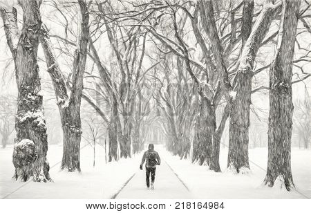 lonely male figure walking in a blizzard - alley of old elm trees - historical Oval at Colorado State University campus, Fort Collins, a photo with digital painitng filter (charcoal)
