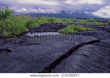 Rugged volcanic landscape of Fernandina Island in the Galapagos