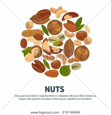 Delicious nutritious nuts advertisement banner with italic sign inside big circle isolated vector illustration . Healthy food full of vitamins and minerals commercial poster.