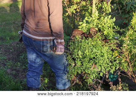 Gardener working in the vegetable garden. Autumn gardening, organic farming concept. Organic farming is an alternative agricultural system, it relies on fertilizers of organic origin such as compost manure.