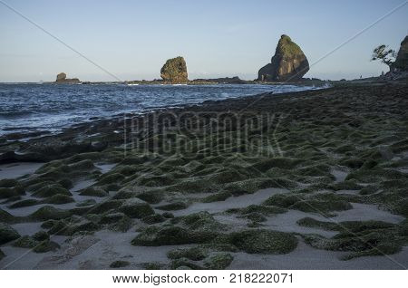 Indonesia: Scenery Of Tanjung Papuma Beach With Rock And Mossy Foreground. Papuma Beach Is Located A