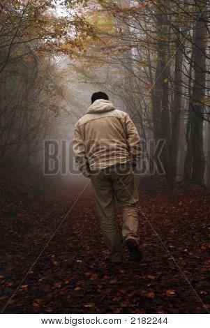 Mysterious Walk