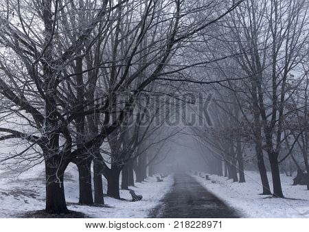 Winter landscape with hoarfrosted trees. Polish winter landscape photographed at frosty and cloudy day.