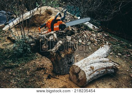 Chainsaw on the uprooted roots of a tree and a log. Against the background of an unorganized garden.