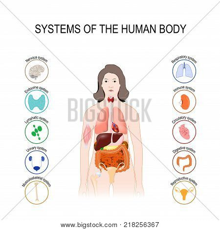 systems of the human body: immune nervous muscule skeletal lymphatic urinary respiratory endocrine reproductive circulatory and digestive system. Medical poster with internal organs on white background. silhouette of a woman. vector illustration. easy to