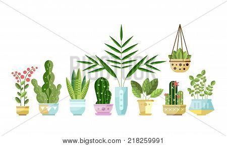 Set of flat style colorful houseplants in pots standing in line. Home decorative, exotic, deciduous green and blooming plants. Vector collection of indoor flowers, design elements isolated on white.