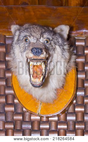 Scarecrow of a wolf on a wooden wall close up