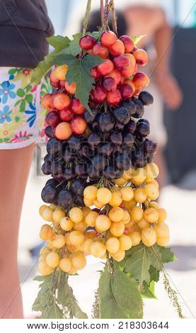 yellow, black and red cherries . In the park in nature