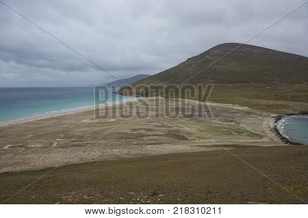The Neck on Saunders Island in the Falkland Islands; home to multiple colonies of Gentoo Penguins (Pygoscelis papua) and other wildlife.